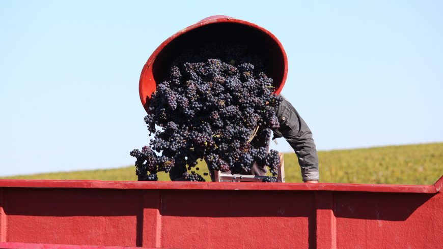 THE 2017 VINTAGE IN BEAUJOLAIS: IMMENSE QUALITY